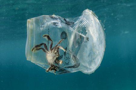 GIORNATA ECOLOGICA con raccolta di PLASTICA e RIFIUTI in mare ed in spiaggia